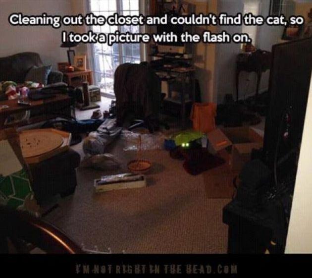 Lost cat3