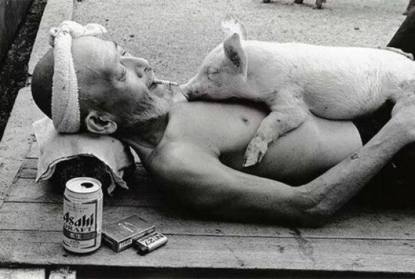Pig pals