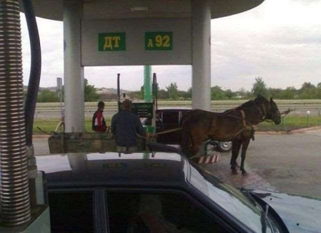 Horse at gas station