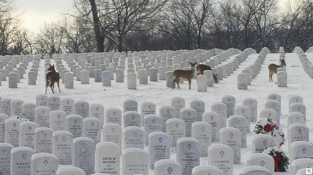 JB Cemetery deer