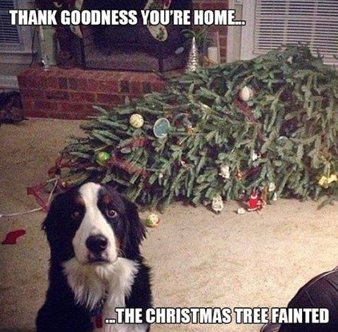 thank-goodness-youre-home