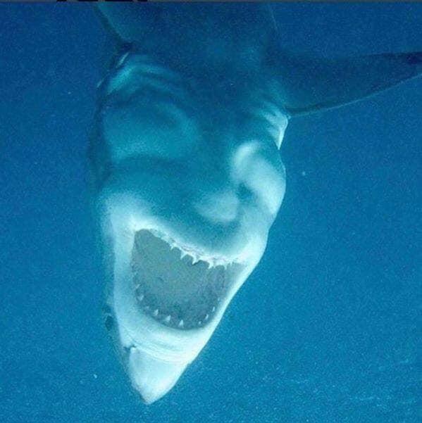 [Image: Creepy-Great-White.jpg?w=599]