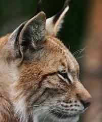 Roadmap de Ubuntu 10.04 Lucid Lynx