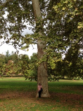 My mum standing next to the biggest tree I've ever seen