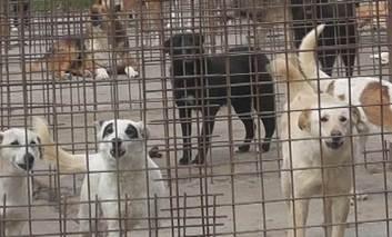 Primaria Pascani, aproape 70 000 de lei pentru hrana cainilor fara stapan