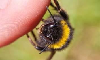 Ce a cauzat atacul violent al albinelor care au produs moartea unui bărbat din Helesteni. Explicaţiile unui apicultor cu experienţă