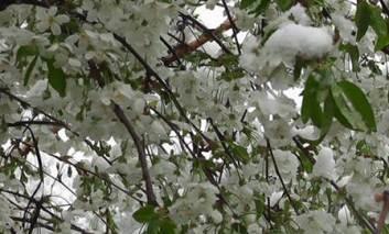 TABEL: Cât de tare v-au fost afectate culturile după episodul de iarnă din aprilie!