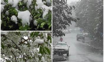 A nins ca în toiul iernii. Pomii fructiferi şi culturile agricole ar putea fi compromise