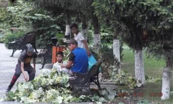 Tei vandalizați de culegătorii de flori
