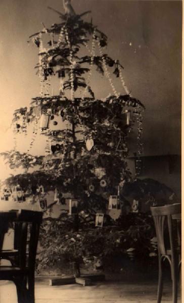 albero-circolo-stanze-polacchi-small1
