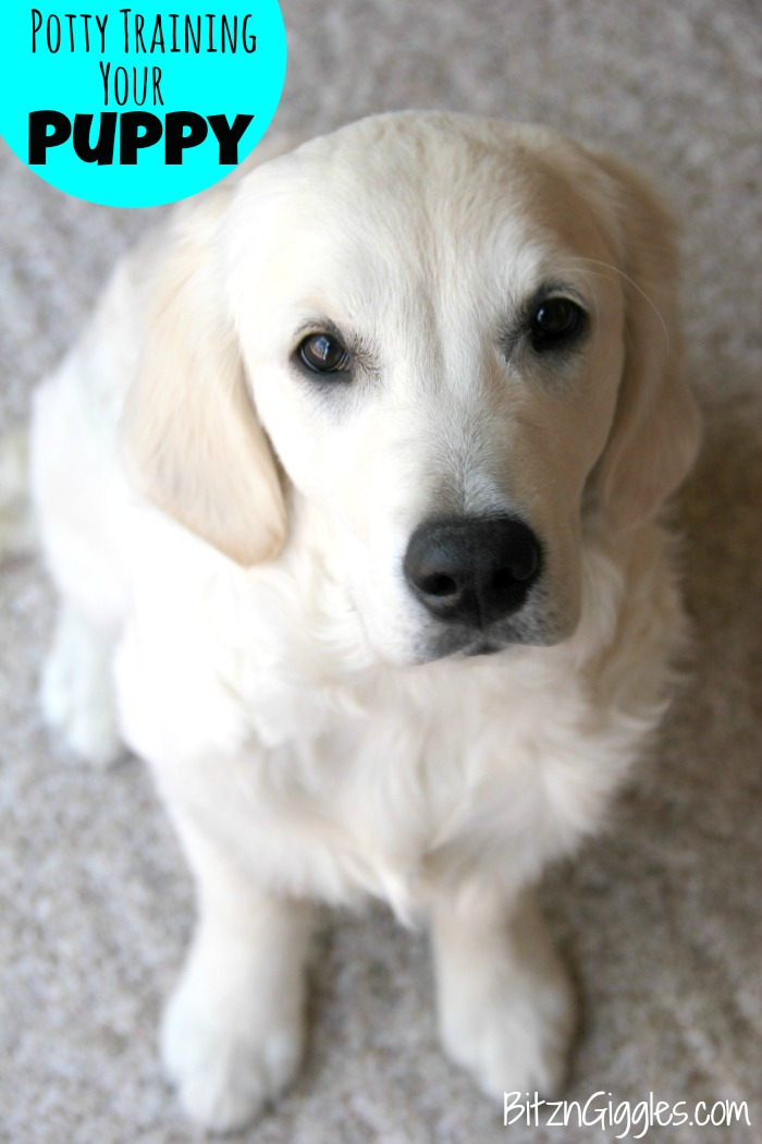 Potty Training Your Puppy - Tips and tricks to get your new furry friend to potty outside instead of inside!