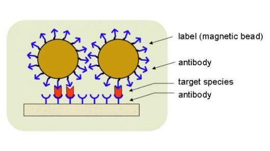 manyetik nano parçacıklı biyosensörler