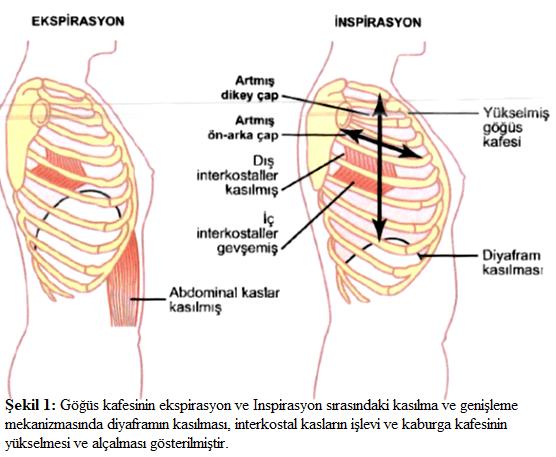 akciğer ventilasyonu