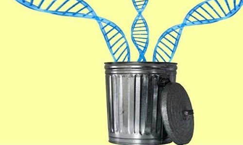 8.2-percent-of-our-DNA-is-functional