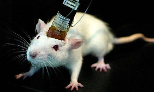 mouse-implant