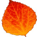 Adjunct Medical Services Logo