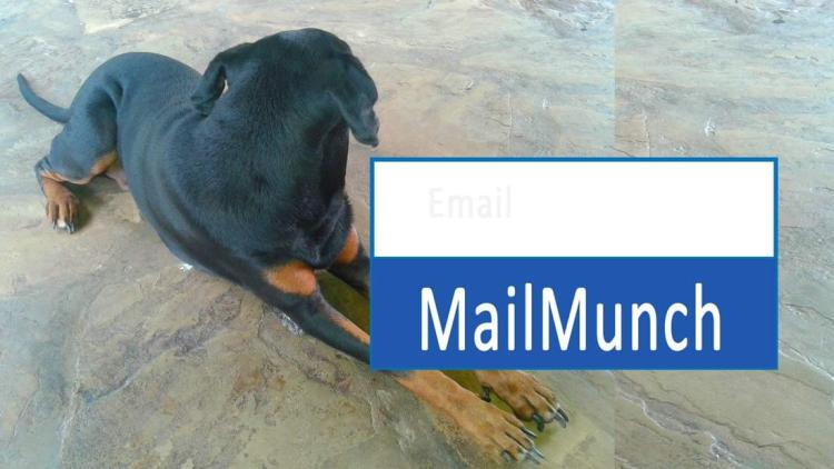 Mailmunch tutorial for beginners