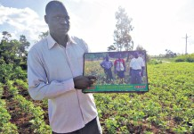 Soybean Farming in Kenya