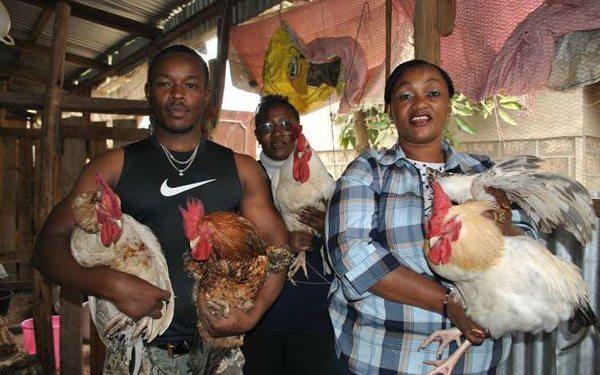 Chicken farming mistakes