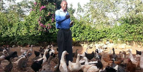 duck farming in Kenya
