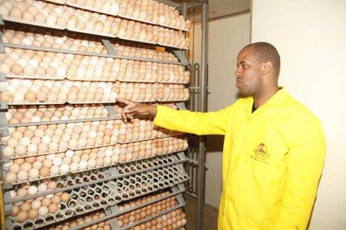 Kienyeji chicken farming in Kenya