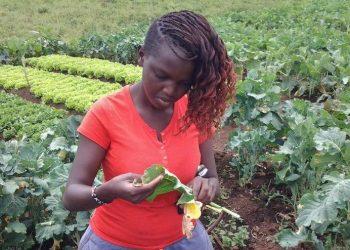 Mixed Farming Kenya