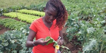 Mixed Farming Kenya