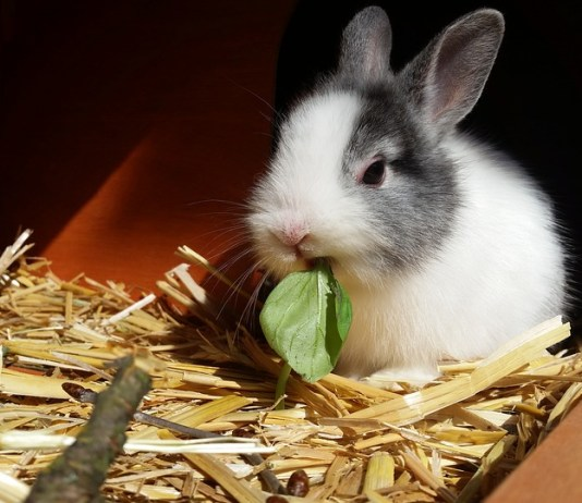 A Rabbit in its hutch