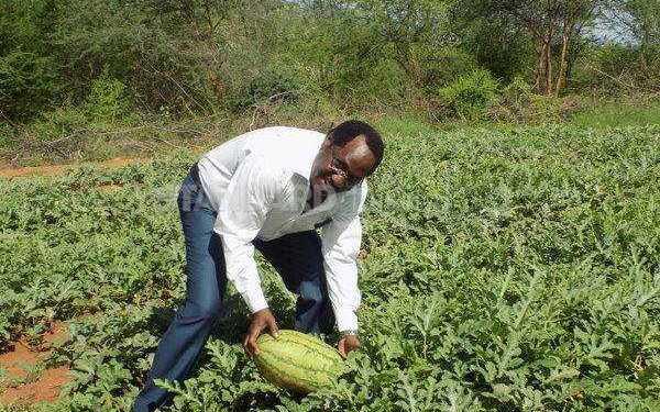 Watermelon Farming in Embu