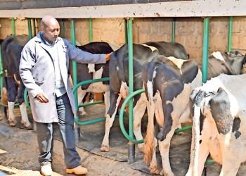 Dairy Farms in Kenya