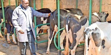 Dairy Farms in Kenya