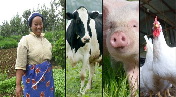 most profitable farming ideas in Kenya