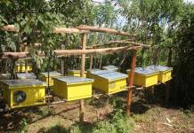 Passive Income from Beekeeping