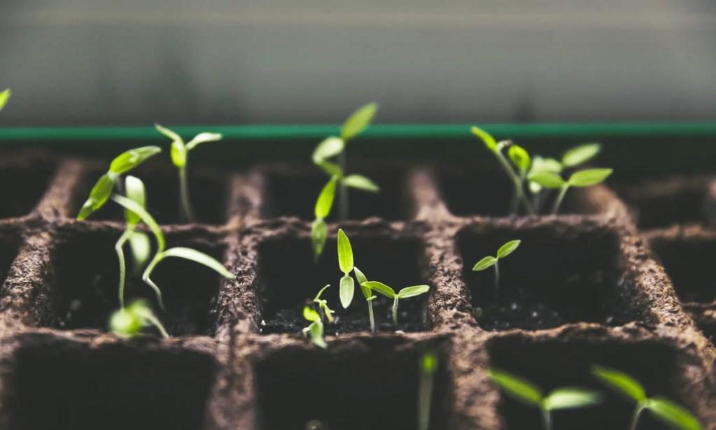 plants growing in soil