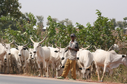 NGF Backs Call For Discontinuation Of Open Grazing