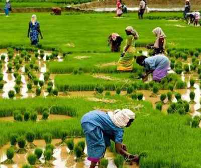 AGSMEIS: How To Access N10m Loan For Small Businesses In Agric Sector