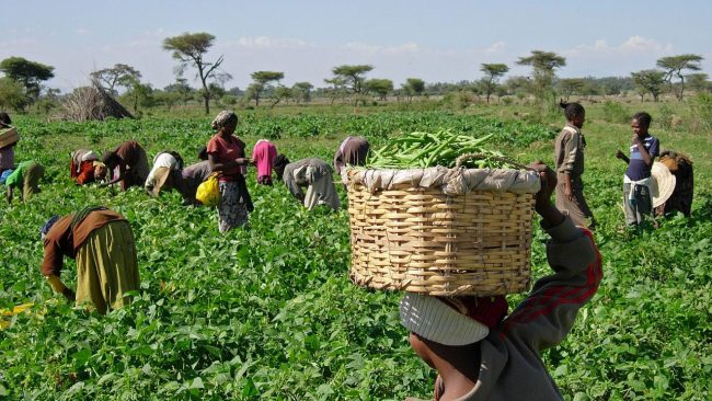 Strengthen Access To Credit For Farmers - Group Tells FG
