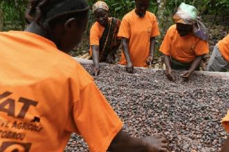 Cocoa price