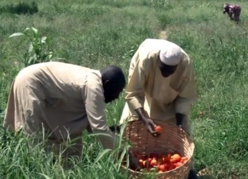 Insecurity: Ondo Govt Registers 95% Of Farmers In Forest Reserve