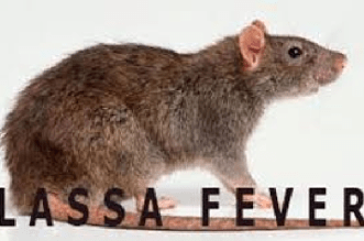 Medical doctor dies from lassa fever
