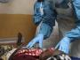 Measles Outbreak in Adamawa