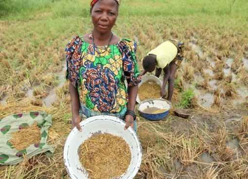 Rice Farmers In Kaduna Get Seedlings, Pesticides, Fertilisers