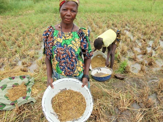 Nigeria Has 500,000 Metric Tonnes Production Gap
