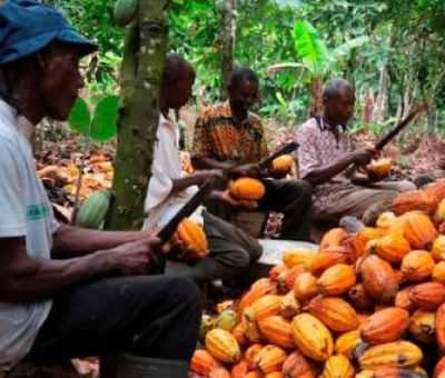 NEXIM Facilitates Export Of 7,000 Tonnes Of Cocoa