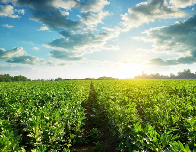 Agriculture, Key To Africa's Quest For Continued Growth, Sustainability