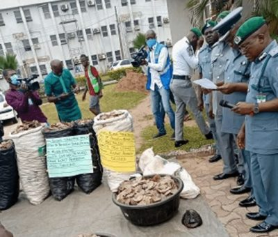 NCS Seizes Pangolin Scale, Claws Worth N1.73bn in Lagos