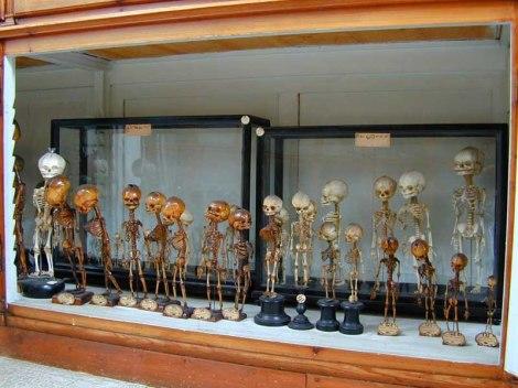 museo firenze2
