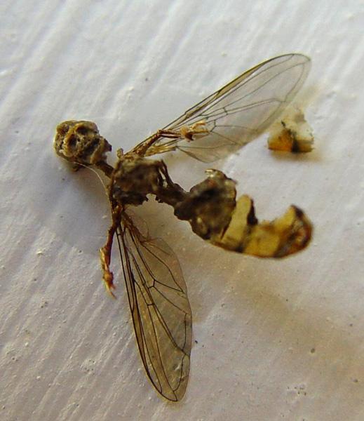 Swarm01(600)