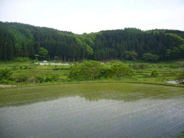 shingo_paysage