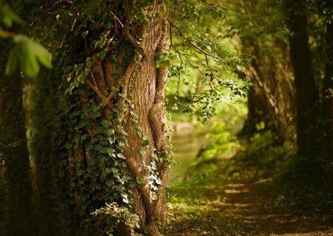un arbre ans la forêt pendant ostara au printemps
